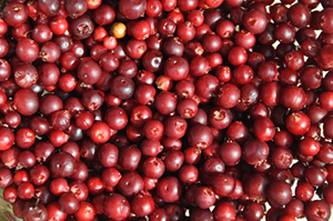 Dental benefits of Cranberries