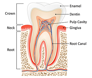 Root Canal Close Up